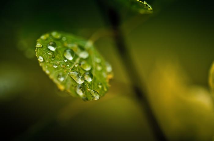 Droplets on Autumn Leaf