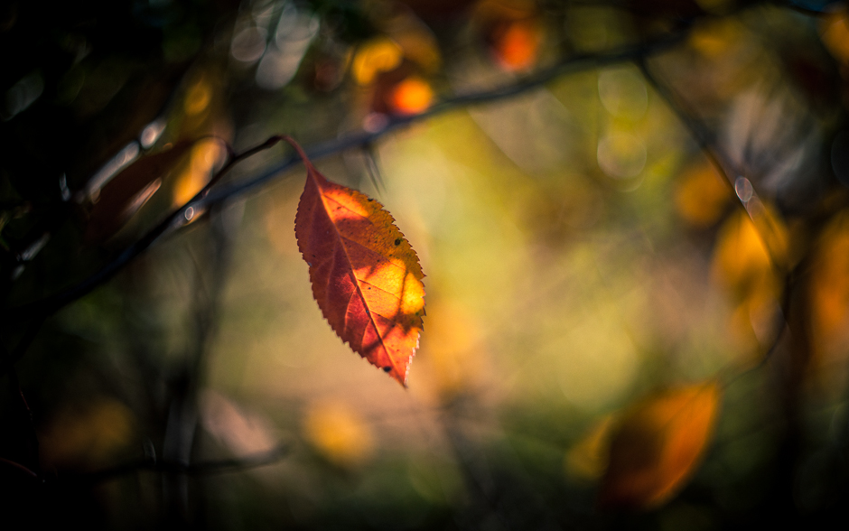 Helios_Autumn-6187-3