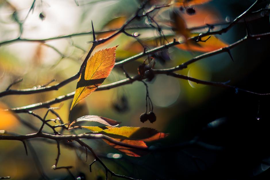 autumn-5838