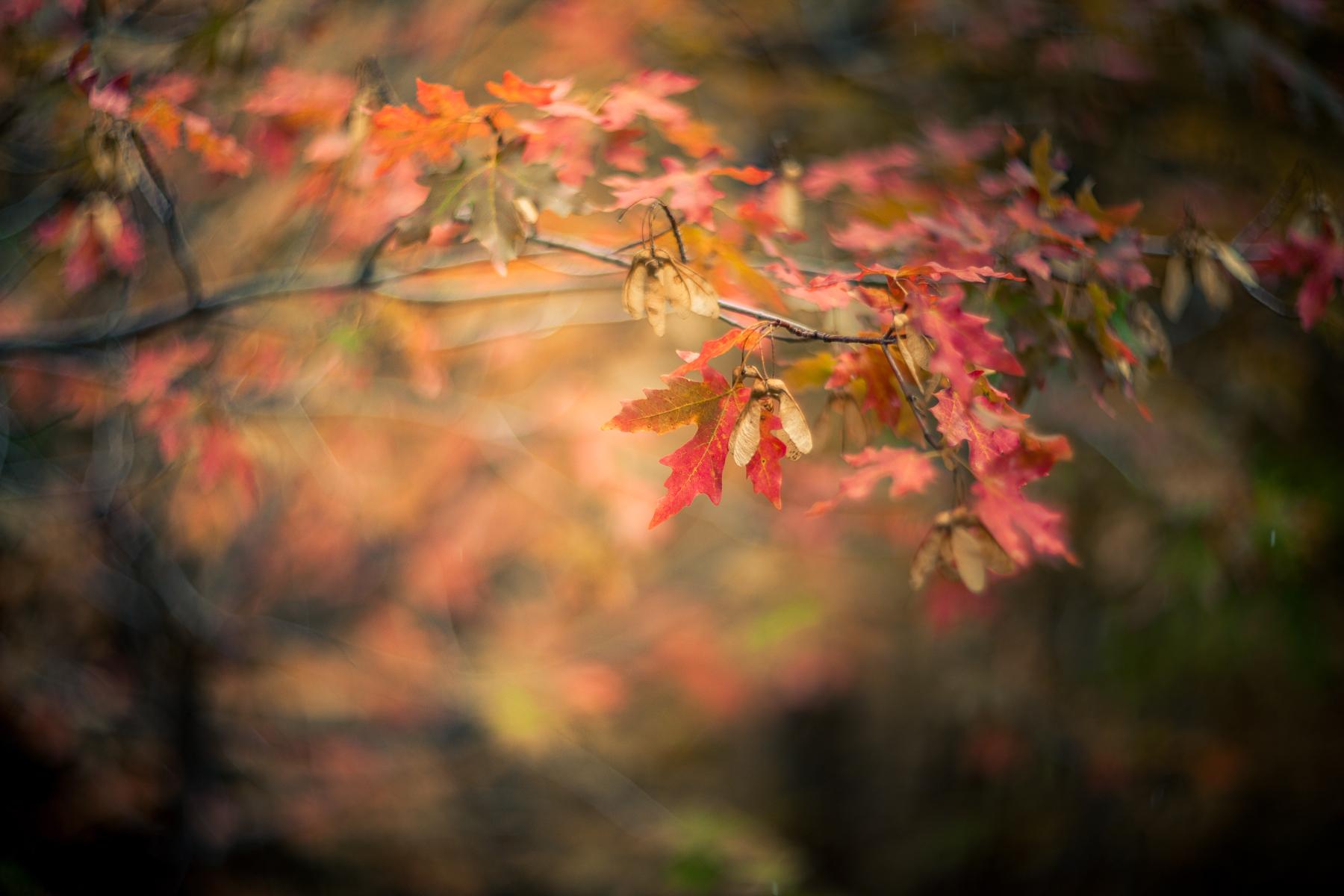 autumn-6115