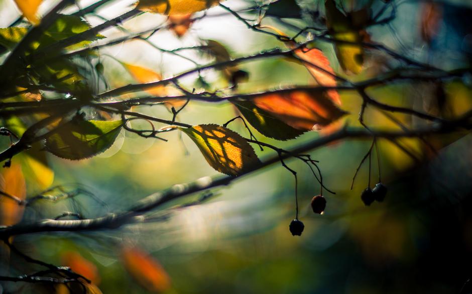 autumn_banner-5837-2