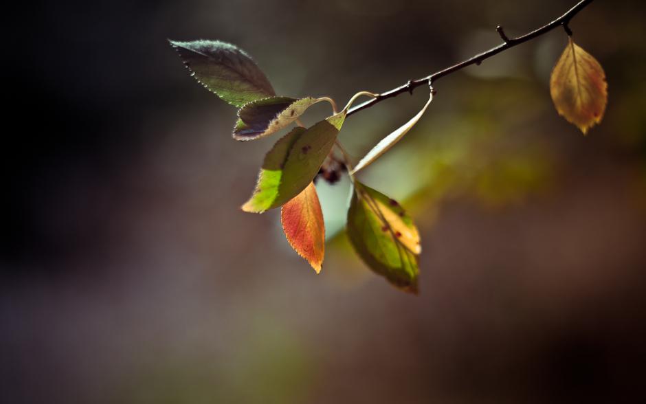 autumn_banner-5841