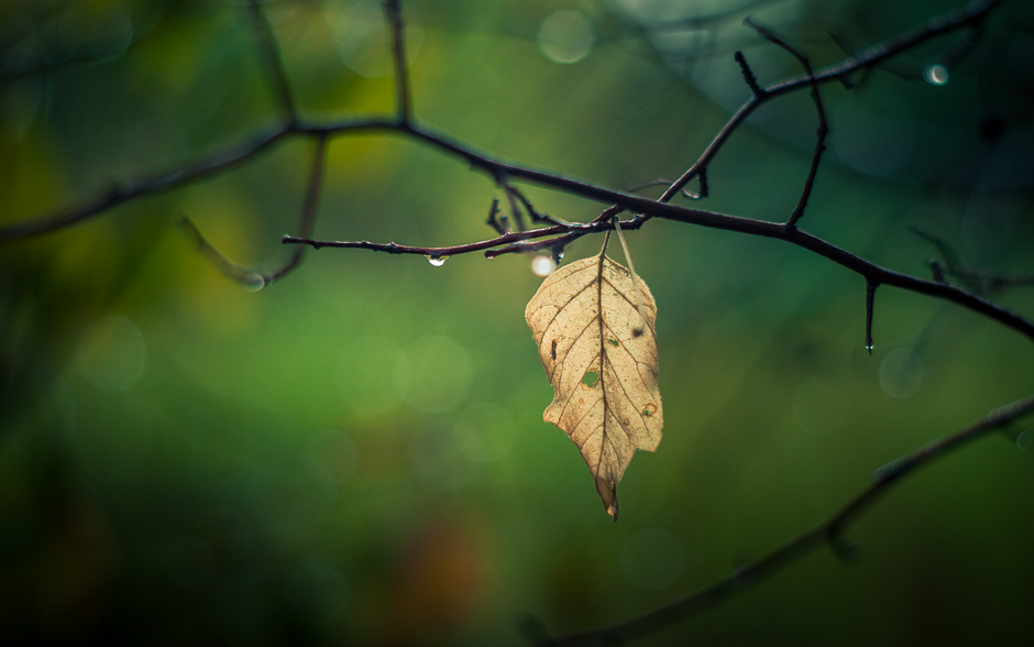 autumn_banner-5904