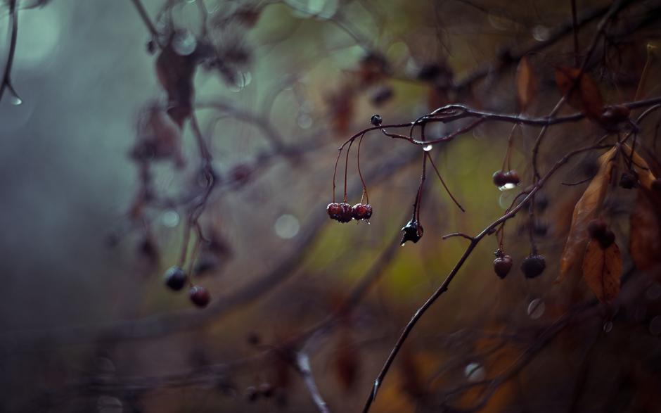 autumn_banner-5908