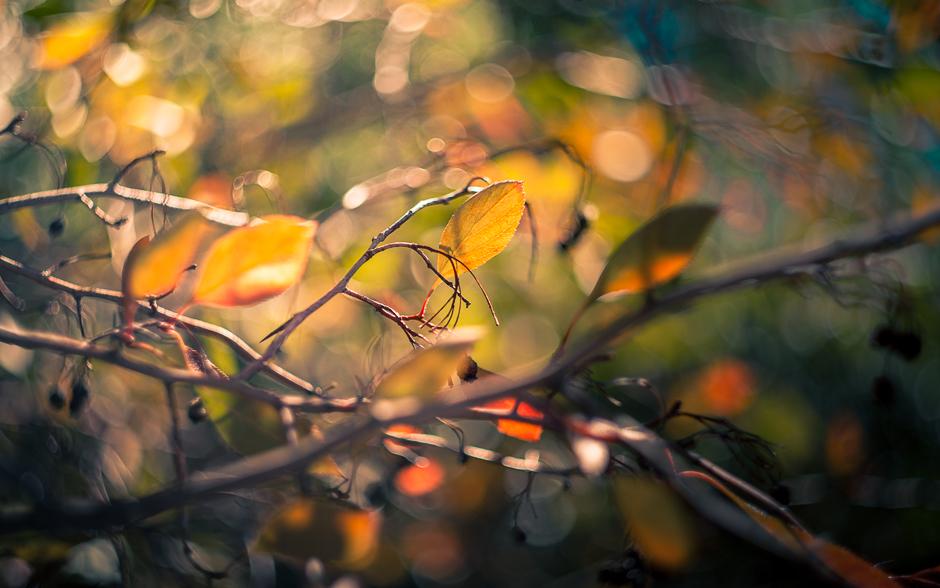 autumn_banner-5966
