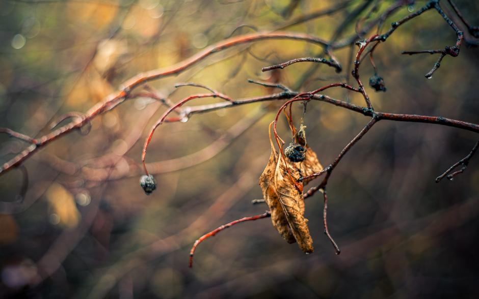 autumn_banner-6015