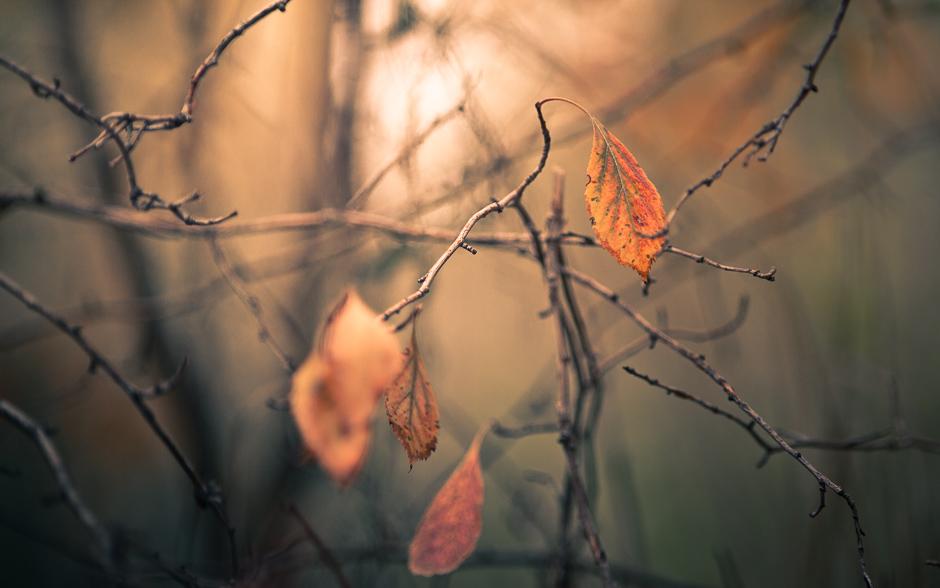 autumn_banner-6106
