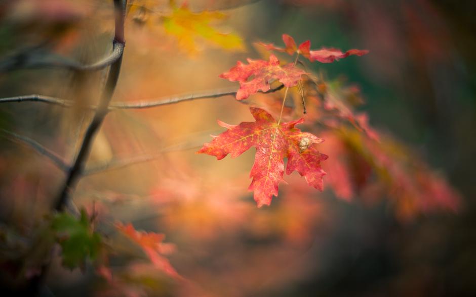 autumn_banner-6113
