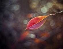 Sunlit September