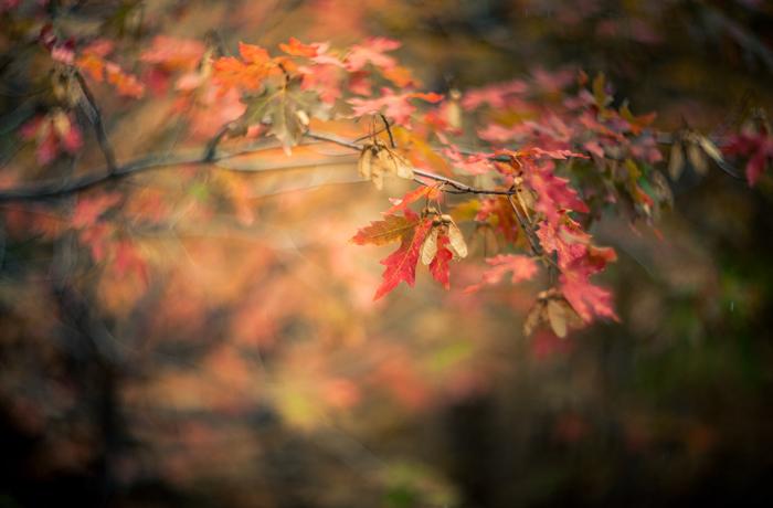 autumn_swirls