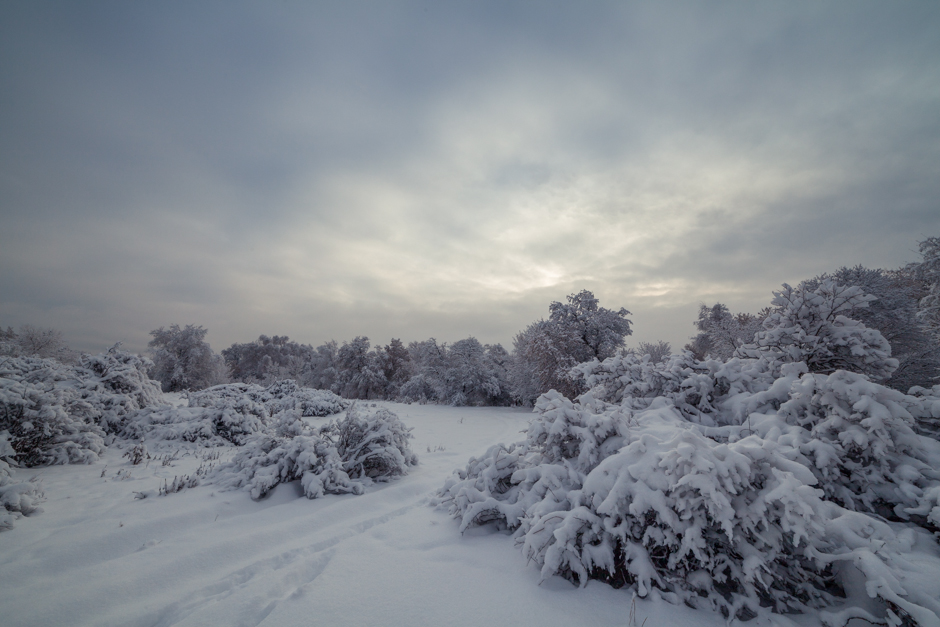 One_Winter_Morning-6889
